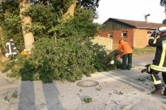 2019-08-27-Baum-Brackel-Bild-2